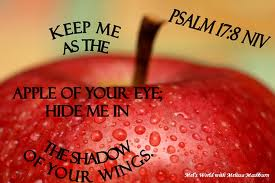 apple of my eye - psalm 17,8